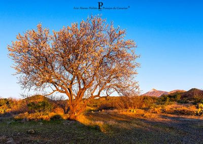 Photos of Tenerife Canary Islands pics amo las islas canarias playas paisajes arbol