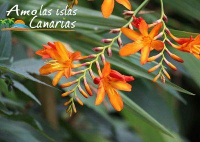 flora de las islas canarias plantas originarias de la tierra imagenes amo las islas canarias