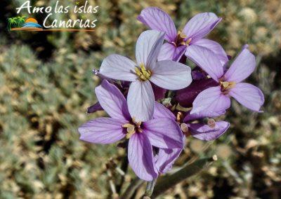 foto flora en las islas canarias vegetacion autoctona de las islas plantas amo las islas canarias