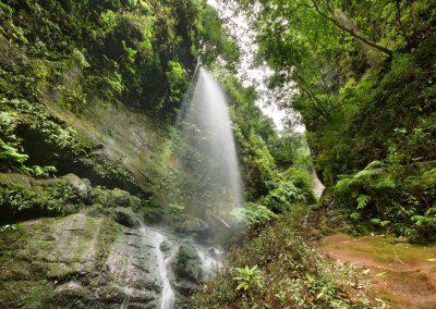 fotografias de senderos en la palma la isla bonita caminos verdes de las islas canarias europa turismo rural fotos