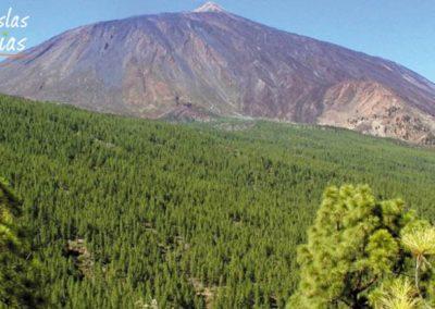 fotos de la corona forestal pineda pinos en los montes de tenerife arona