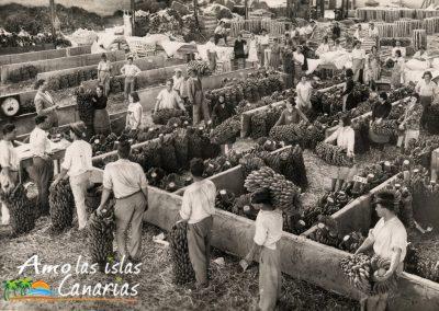 fotos de la post guerra recogida de platanos en las islas canarias españa arona