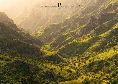 fotos de la vegetacion de las Islas canarias Tenerife La Gomera Gran Canaria amolasislascanarias.es