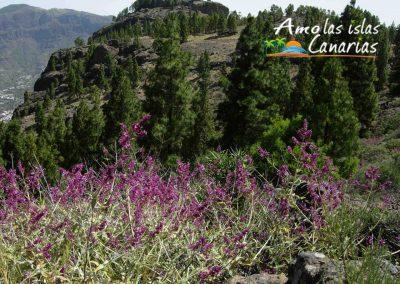 fotos de paisajes naturales imagenes panoramicas arona