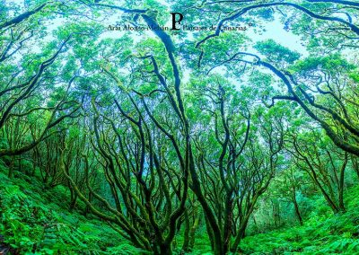 fotos de paisajes vegetacion de las Islas canarias Tenerife La Gomera Gran Canaria amolasislascanarias.es