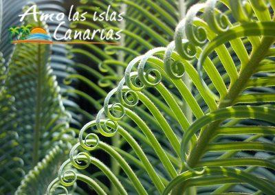 imagenes de la vegetacion autoctona de las amo las islas canarias i love canary island