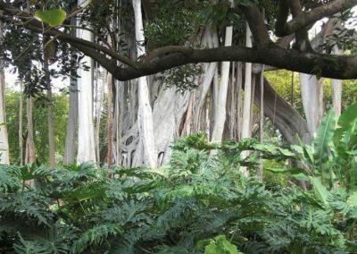 jardin botanico en el puerto de la cruz imagenes de tenerife norte lugares de interes islas canarias turismo españa