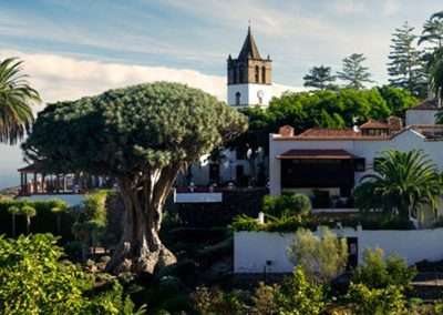 parque del drago milenario en icod de los vinos tenerife