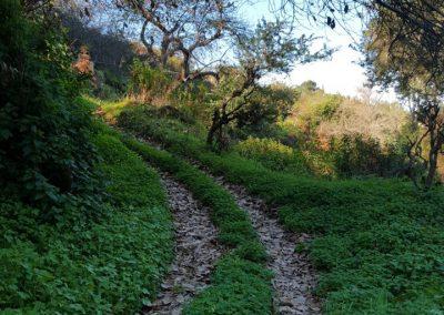 senderismo en el bosque la guancha tenerife