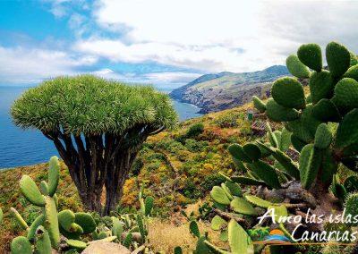 tipos de vegetacion de la palma en islas canarias fotos amo las islas canarias