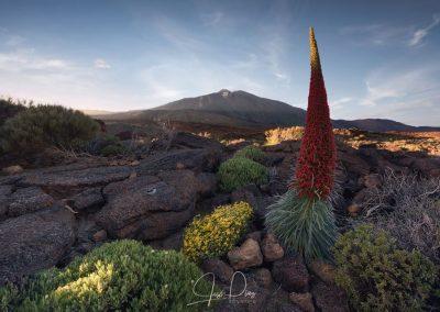 parque nacional del teide foto tenerife amo las islas canarias