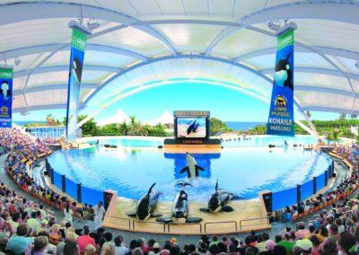 loro-parque-orcas-3