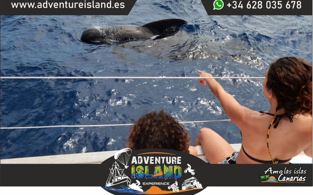 boat trip dolphins whale watching in tenerife
